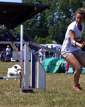 activites-canines-dog-trotteuse.JPG