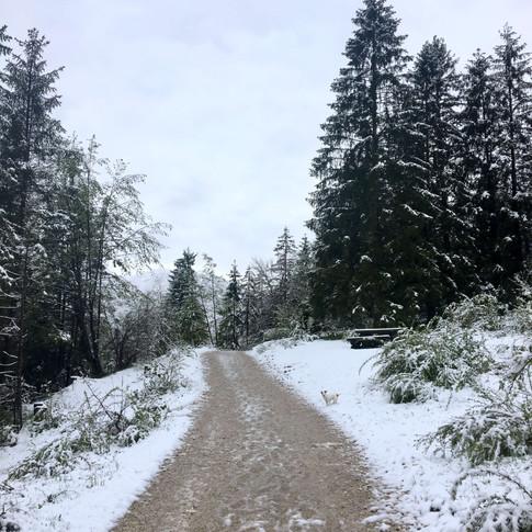 slovenie-neige-dog-trotteuse.jpg