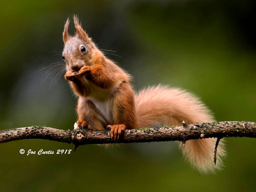 Wildlife talk with renowned photographer Joe Curtis