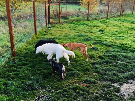 Doggie Times, Fun in the garden