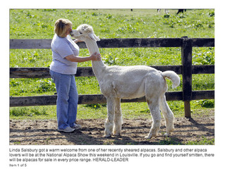 More Kentuckians are falling in love with alpacas - and with good reason
