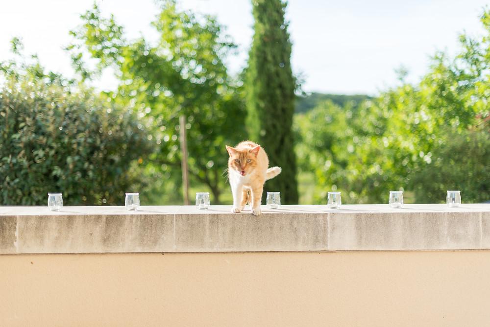 Photographe mariage Mas de Loisonville Grillon vin d'honneur Provence Gard Lubéron Savoie Haute-Savoie