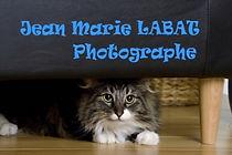 chatte photographié par JM LABAT