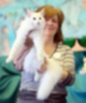 élevage et vente de chatons norvégiens région Paris