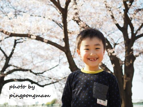 桜と一緒にロケーションフォト│さいたま市