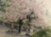 Cherry Blossoms.png