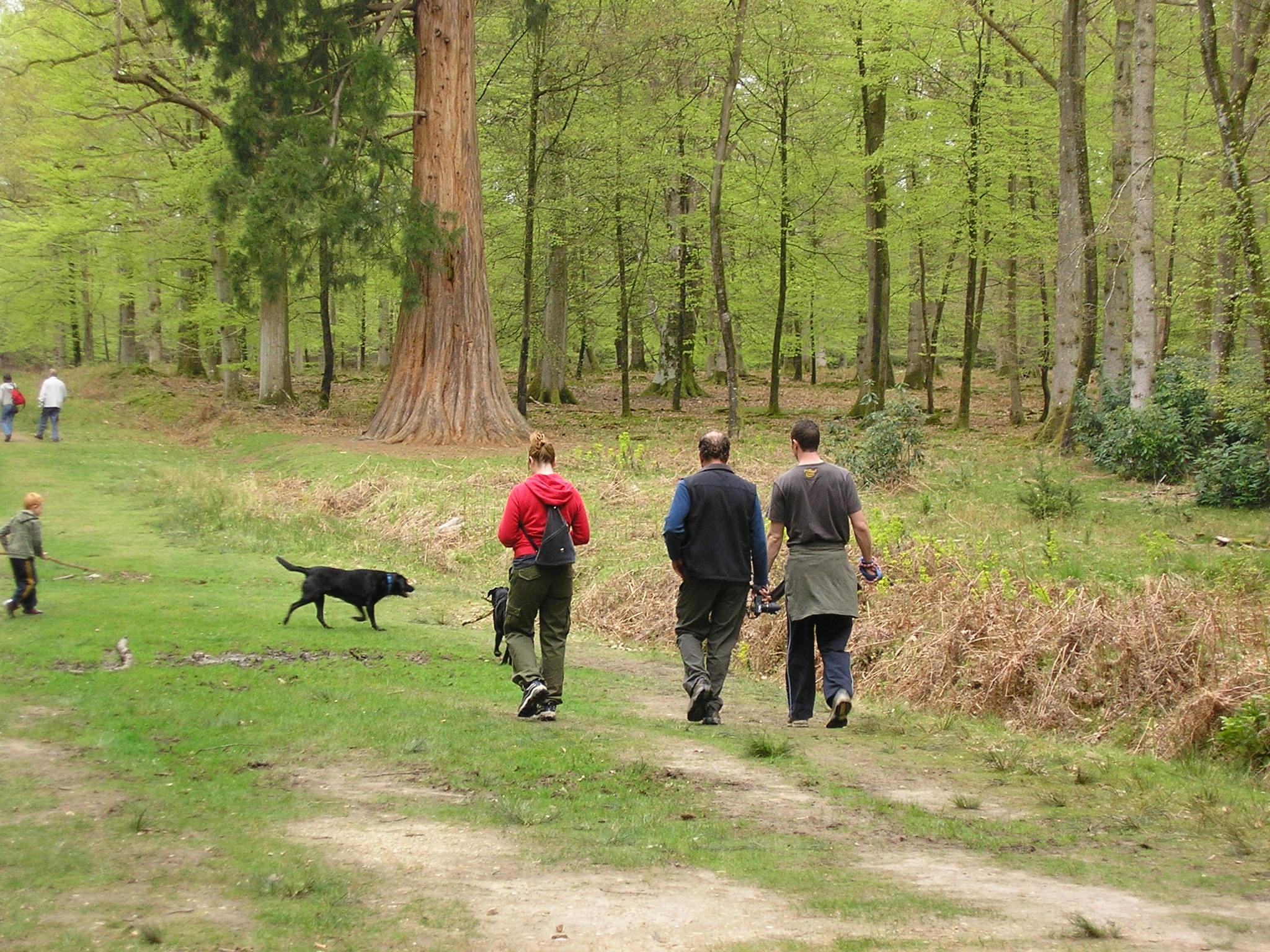 Virtual exercise walks