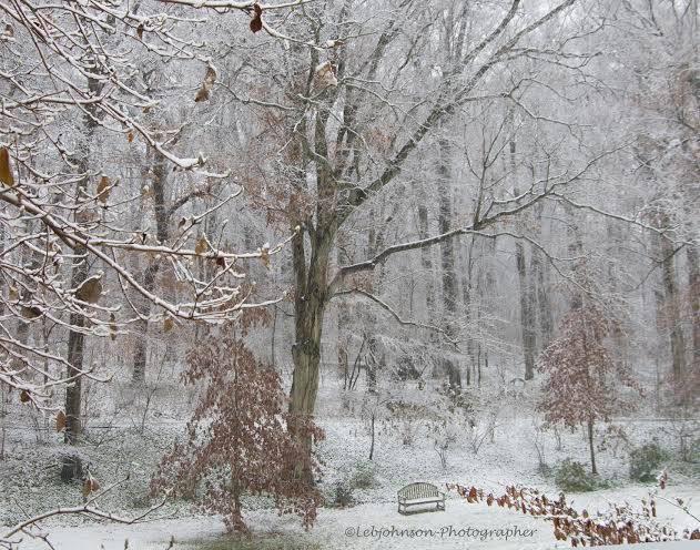 LEBJ winterscene.jpg