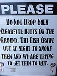 cigarette butts.webp