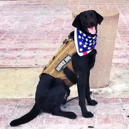 SERVICE DOG TRAINING (Tuesday)