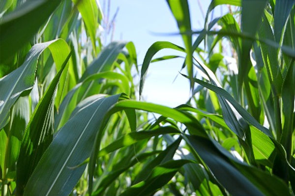 agriculture photo gallery,indian farmer hd images download