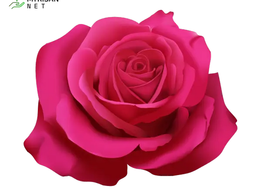 30 Best Pink Flowers names and pictures