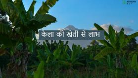 केले की खेती (banana farming) की संपूर्ण जानकारी
