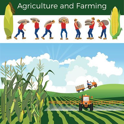 what is agrticulture