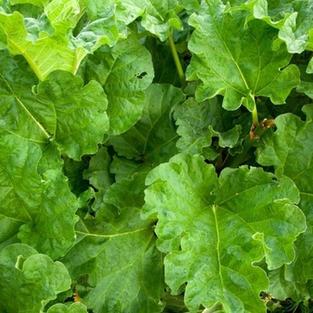 green vegetables agriculture