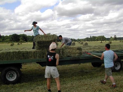 farming activity images