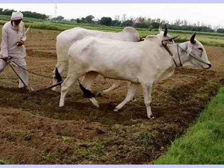 PM Kisan Samman Nidhi Status Check 2020