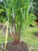 Kisan Net:गन्ना किसान पर्ची कलेंडर ऑनलाइन