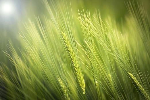 UP agriculture,Kisan registration online 2021,upagriculture.com
