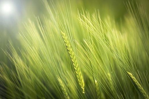 UP agriculture,Kisan registration online 2020:upagriculture.com