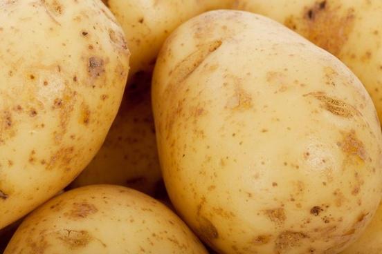 potato farming tips in hindi