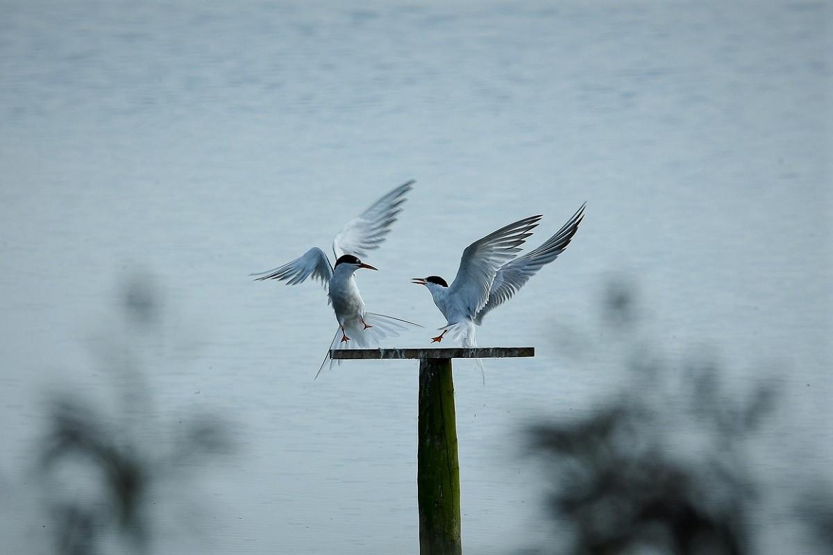 PDI - Love Birds by Brendan Esler (9 marks)