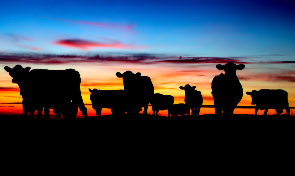 PDI - Sunset Cows by Paul Harvey (8 marks)