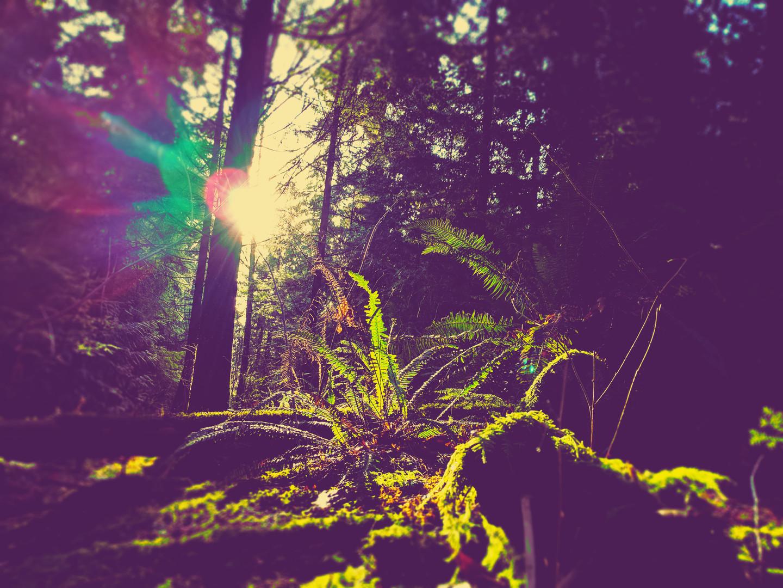 Trees .jpg