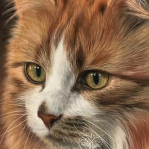 Cat2 Portrait (3).jpg