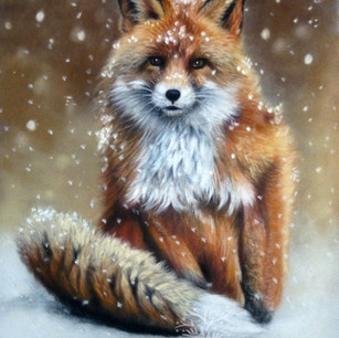 Fox Portrait (1).jpg