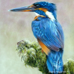Kingfisher+contrast (2).JPG