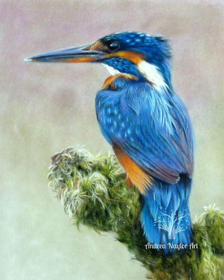 Kingfisher+contrast (1).JPG