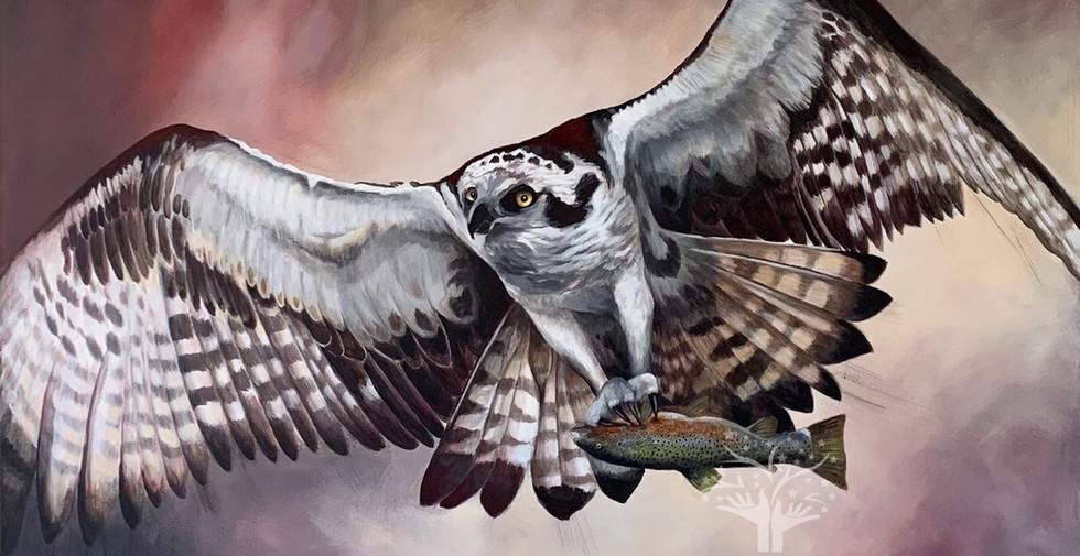 Ollie the Osprey