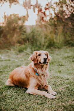 dog in park pet photography family photography los angeles california