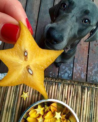 Star-fruit.