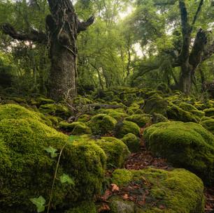 Italy - Riserva naturale Selva del Lamone