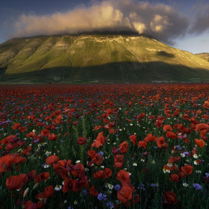 Italy - National Park of Sibillini Mountains, fields of poppies