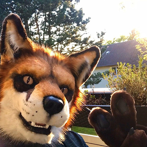 Ryf the red fox