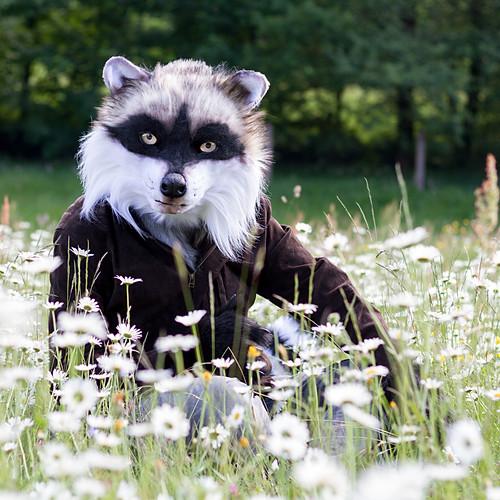 Daweo the Raccoon