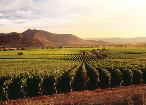 La Ruta del Vino