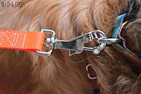 Heavy Duty Locking Dog Leash Orange