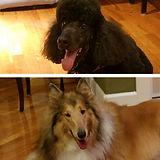 Lonnies Dogs.jpg