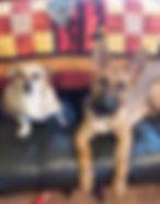 German Shepard Puppy Dog