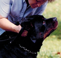 Dog Training with Heavy Duty Locking Dog Leash