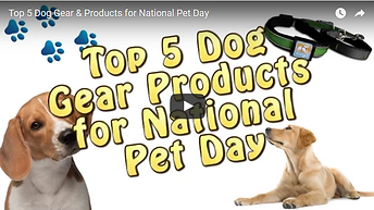 TTPM Top 5 Dog Gear Products Video