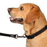 Lab Using Black Heavy Duty Dog Leash