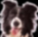 Dog Leash for Med/Lg Dogs