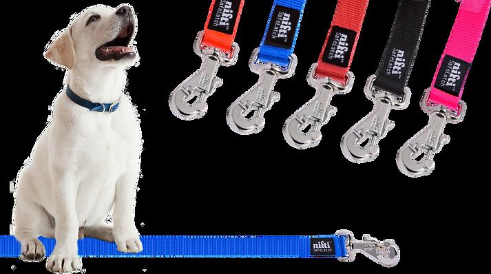 Lab Puppy with Heavy Duty Locking Dog Leash