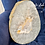 Thumbnail: Agate Slab Collection 3