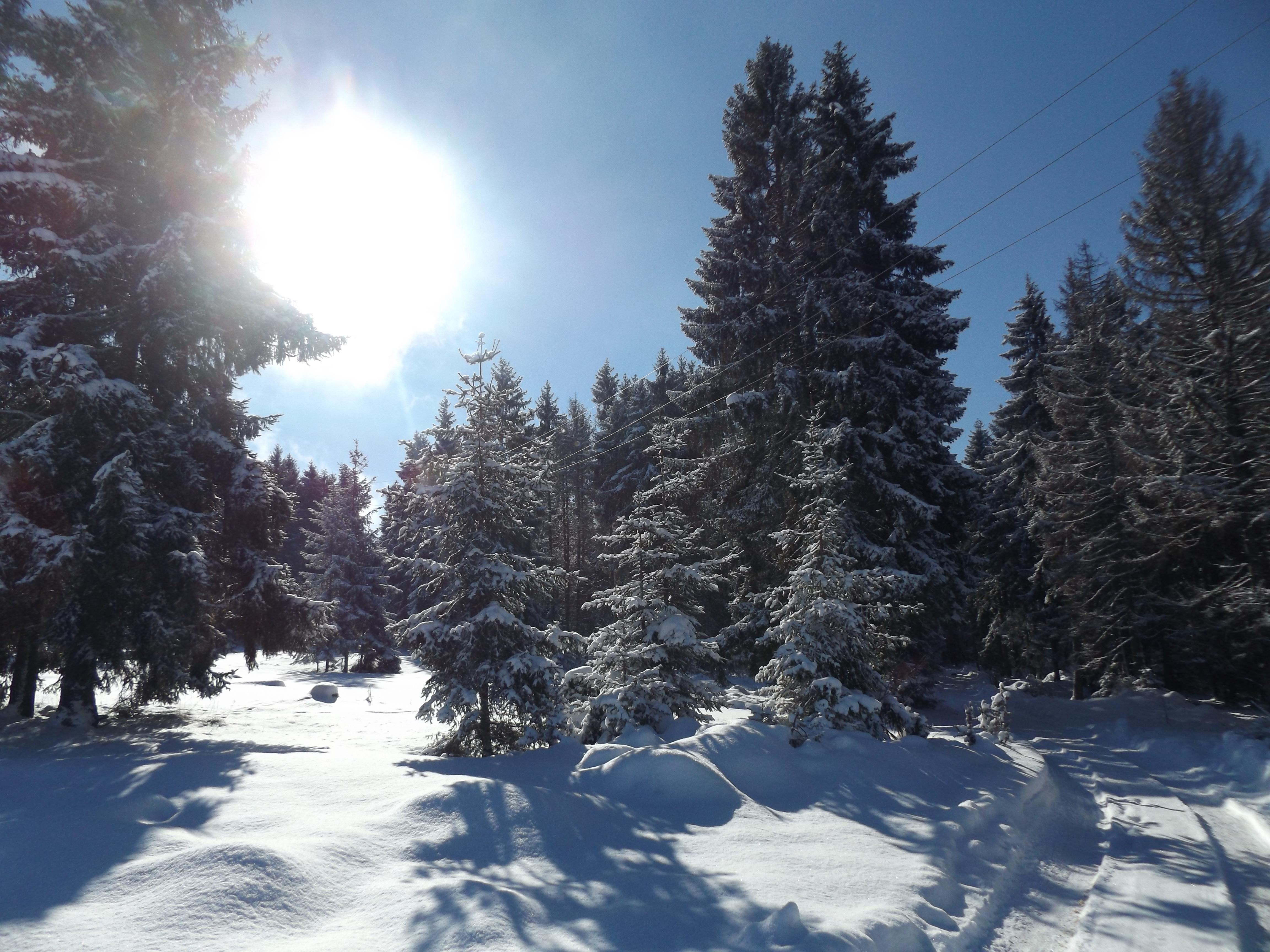 Winter 5, Rudno, Golija, Šekler